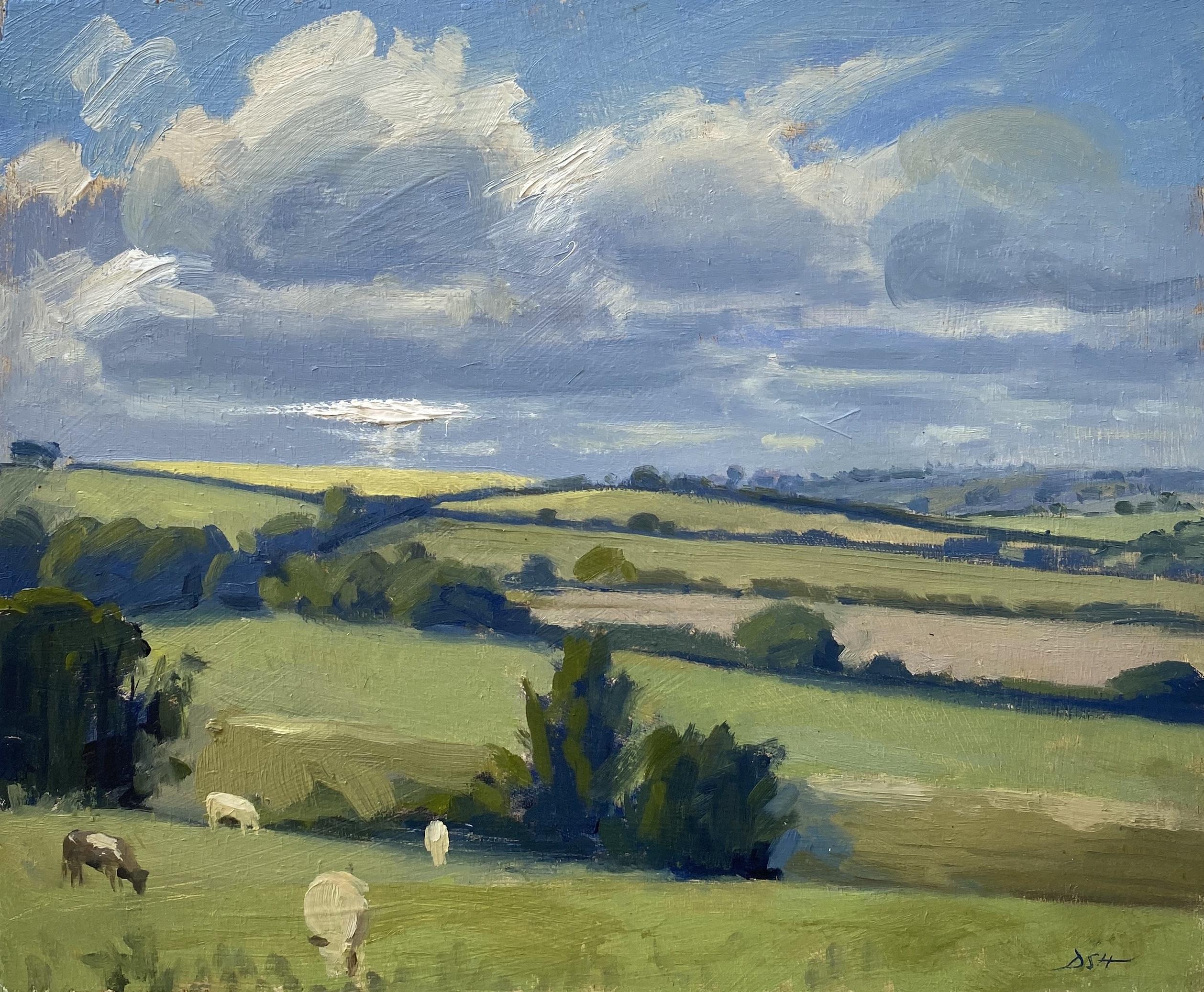 Evening light, cows grazing fields near Gerrans