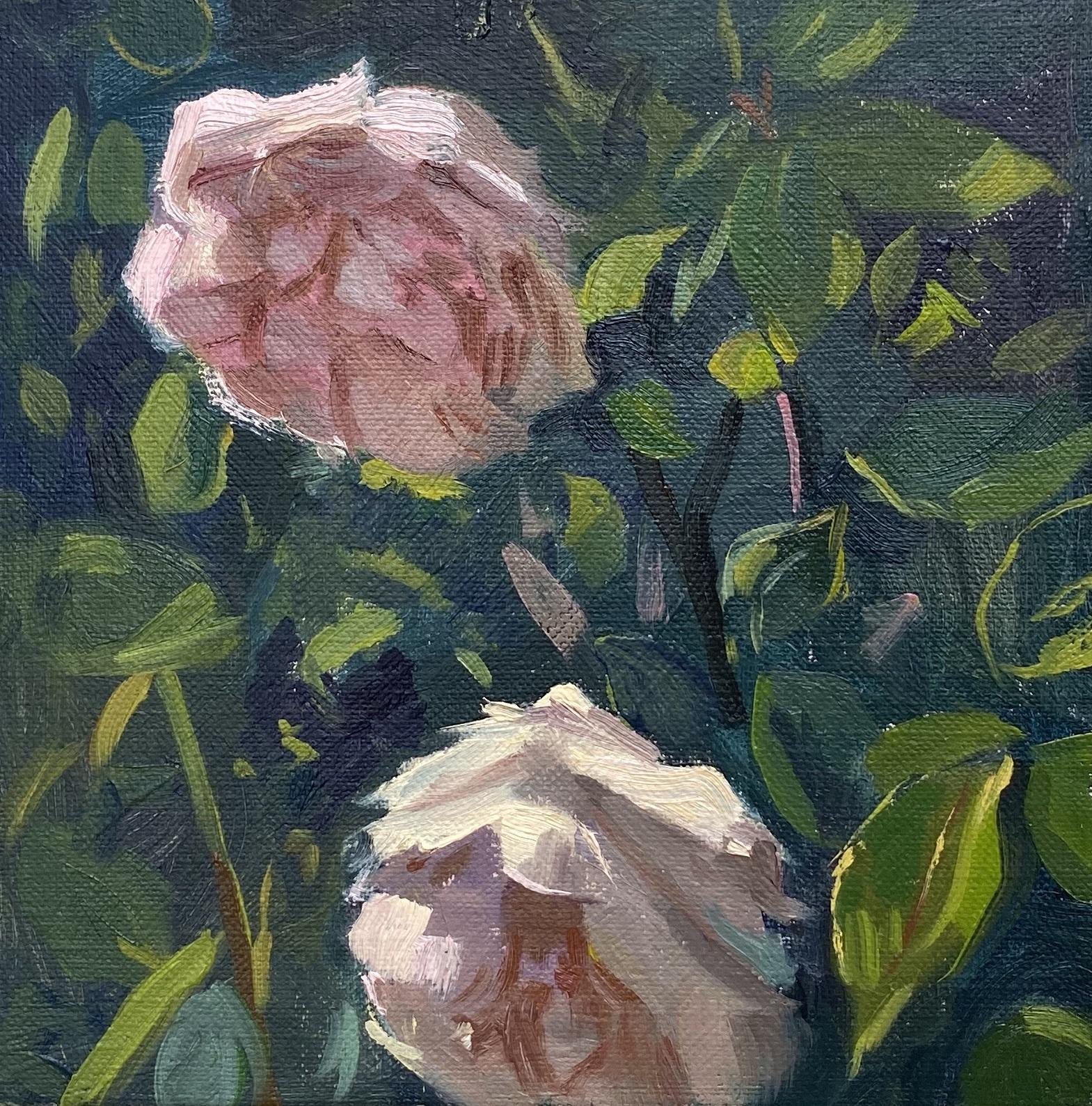 Sunlight on David Austen Roses in the garden